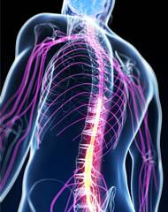 pravilna drža hrbtenice