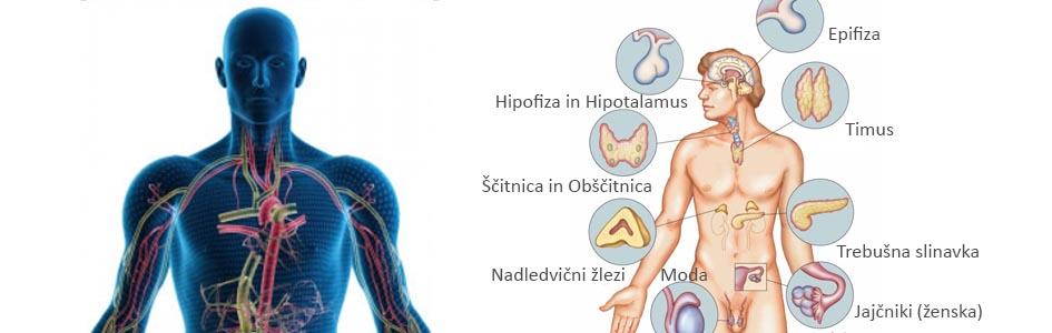 kako spodbuditi delovanje hormonov