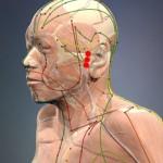 Ušesna vrata (TW 21 – Trojni grelec) Mesto poslušanja (SI 19 – Tanko črevo) Ponovno srečanje sluha (GB 2 – Žolčnik)