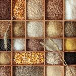 Soja je ena izmed najpogostejših žitaric, ki povzročajo alergije. Sledi ji pšenica, ki je skupaj z drugimi žitaricami, ki vsebujejo gluten