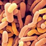 Acidofilus proti herpesu