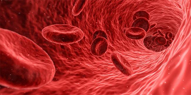 Rdeče krvničke