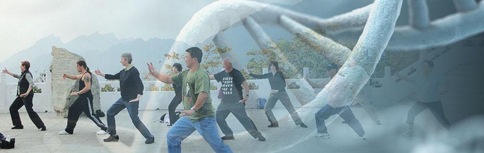 TaiChi podaljšuje življenje – regenerira DNK