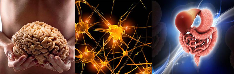 V vašem črevesju so drugi možgani (Enterični živčni sistem)