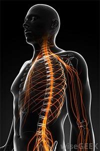 proprioceptični živci
