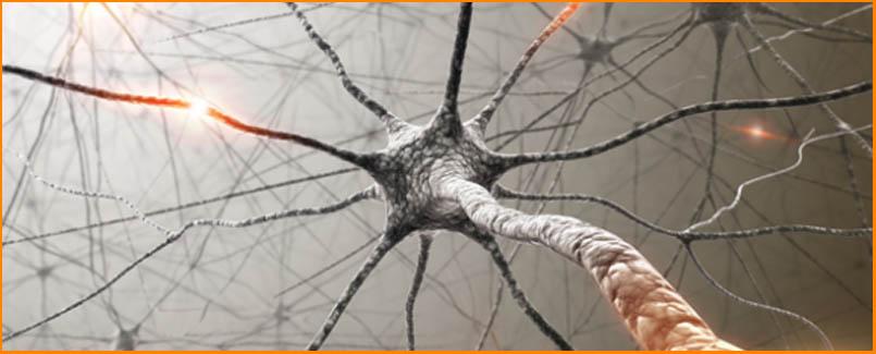 Avtonomni Živčni Sistem (parasimpatično in simpatično živčevje)