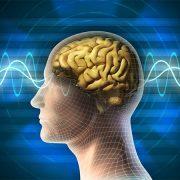 možganski-valovi-za-učenje